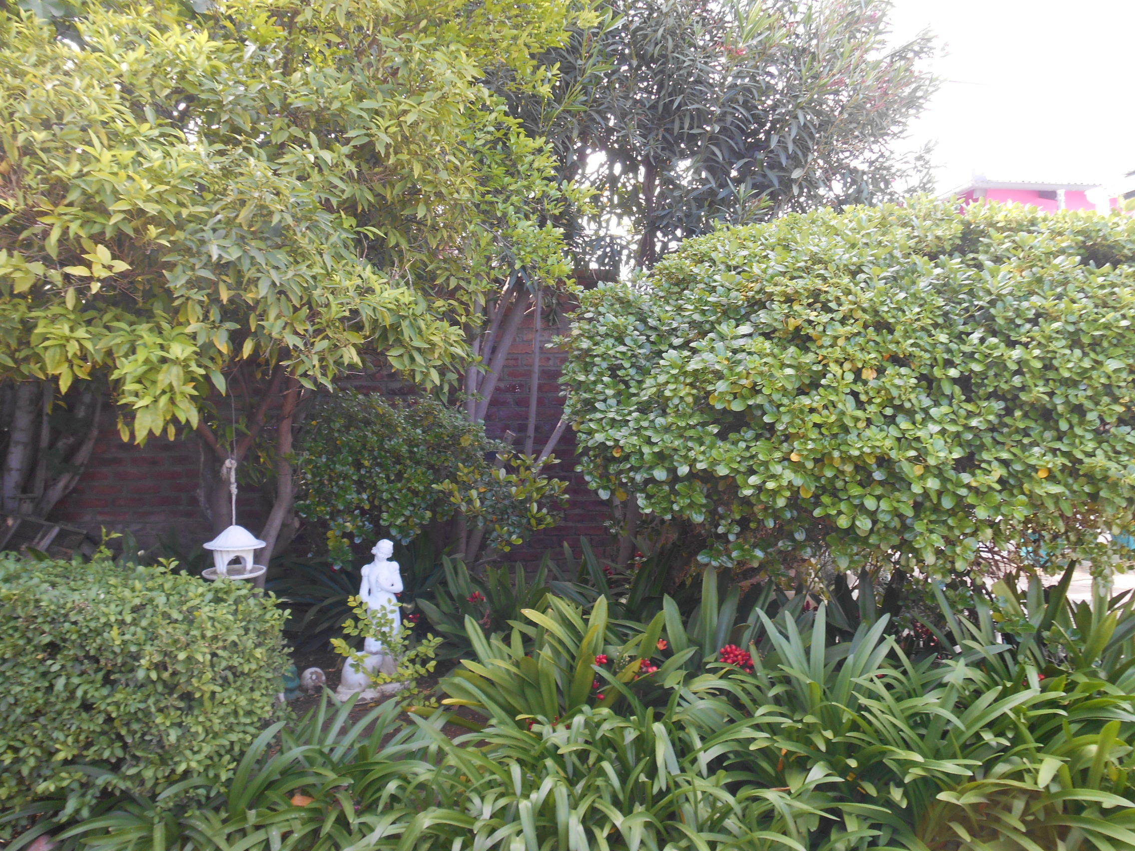 Obesa Garden